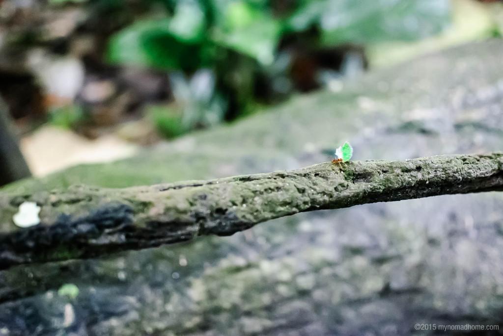 Ant in Randers Regnskov