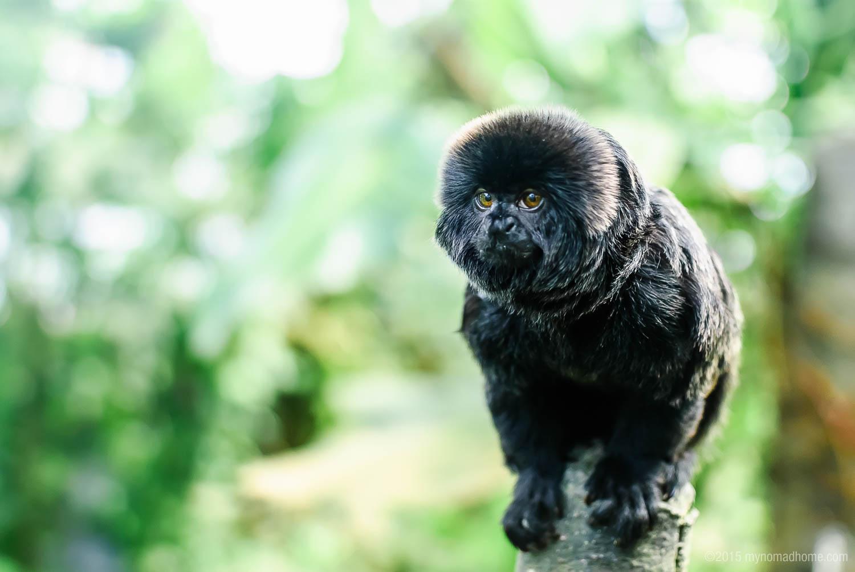 Monkey in Randers Regnskov