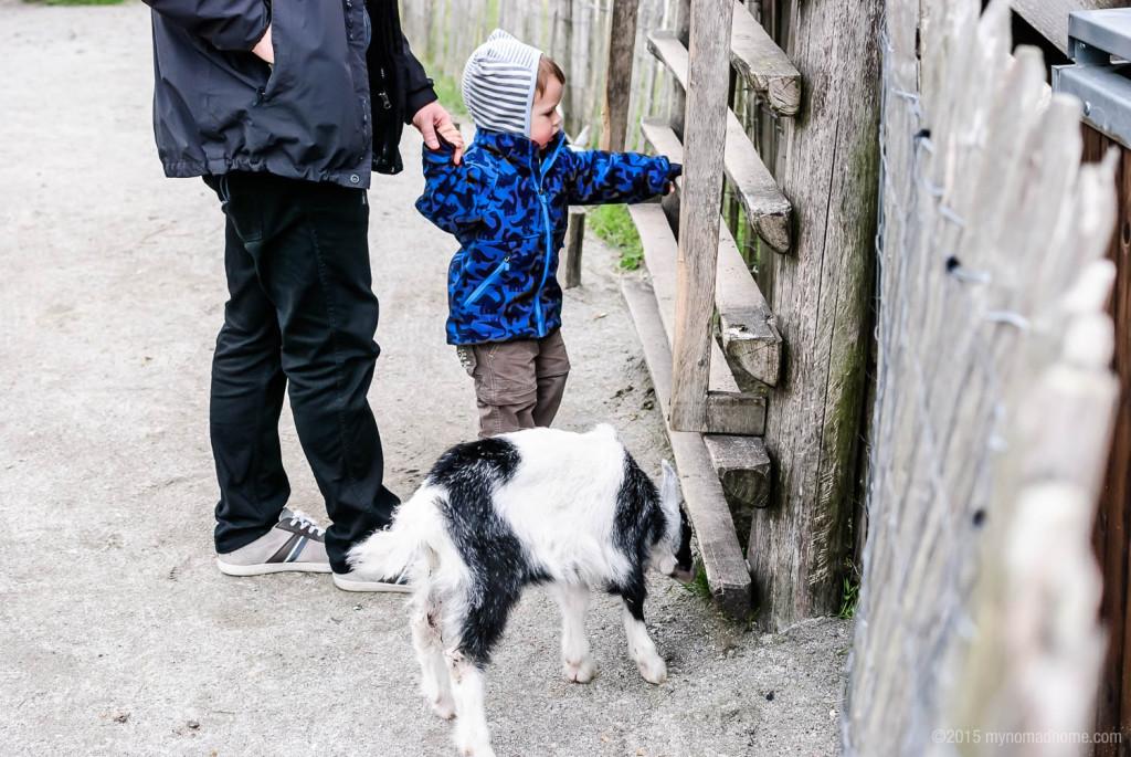 Goats in Randers Regnskov